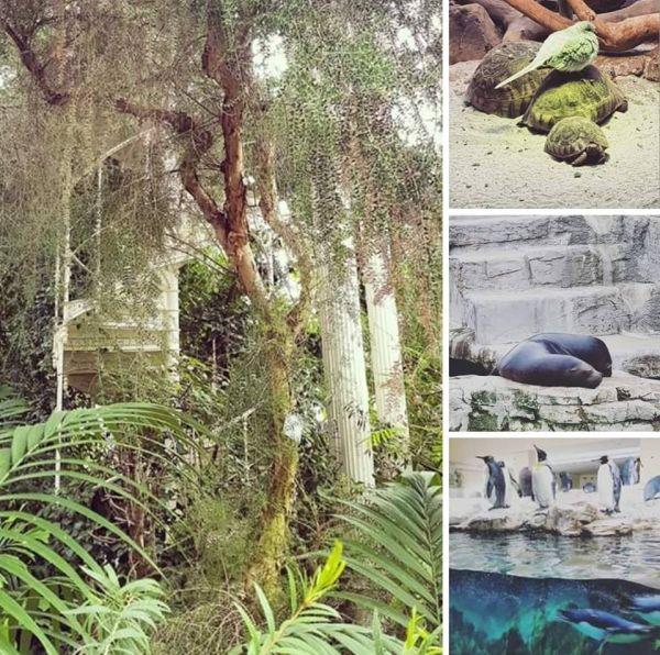 Wiedeń Zoo i palmiarnia