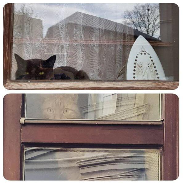 Koty w oknie ulica Jezuicka