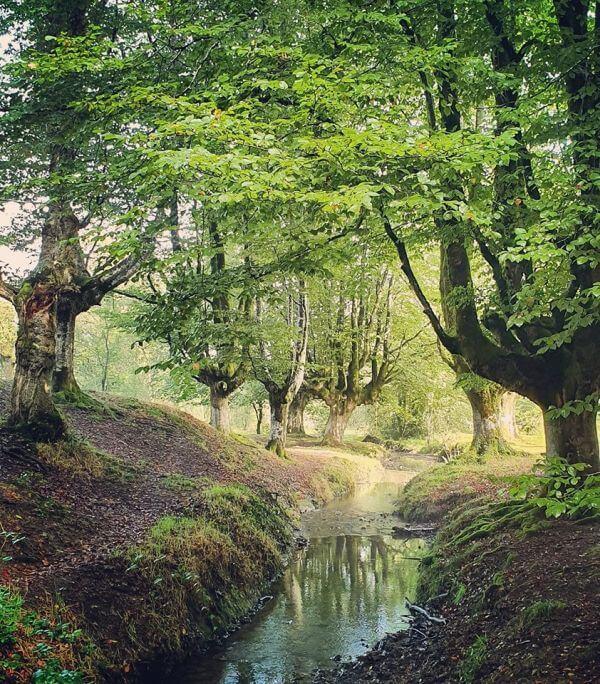 Otzaretta Forest